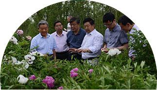甘肃牡丹园林——实力雄厚 国家扶持