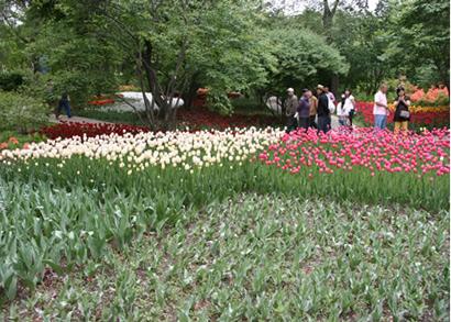 沈阳植物园郁金香花展