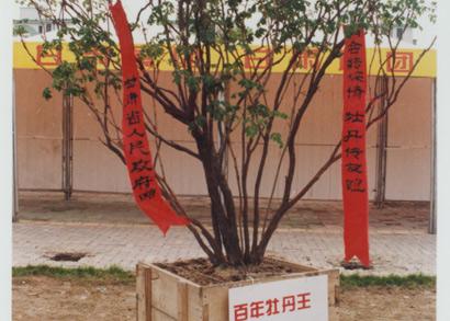 上海植物园牡丹展