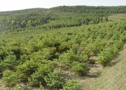 东胜区林业生态建设荒山造林绿化和植被恢复工程