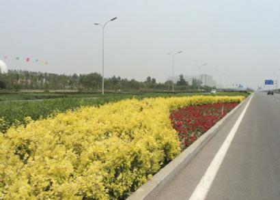 鄂尔多斯康巴什道路绿化工程