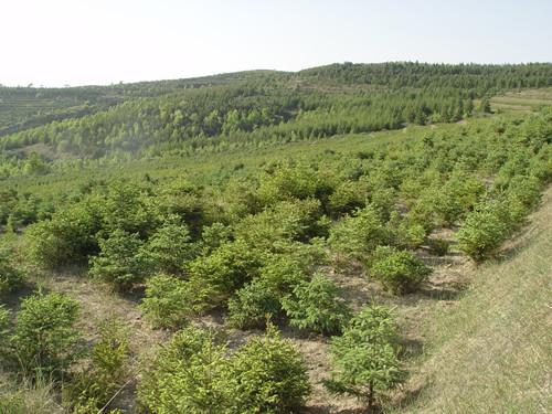 牡丹园林样板园工程
