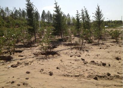 鄂尔多斯东胜区109国道绿化建设工程