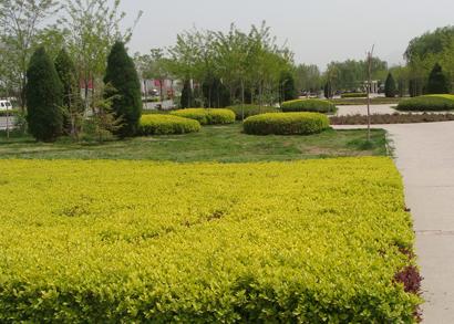 鄂尔多斯东胜区纺织公园绿化工程