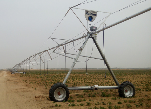 甘肃油用牡丹在陕北榆林地区示范种植